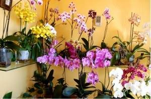 orquidea posada el cuadrante