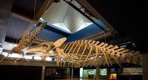 Exposición en el Museo Marítimo de Santander